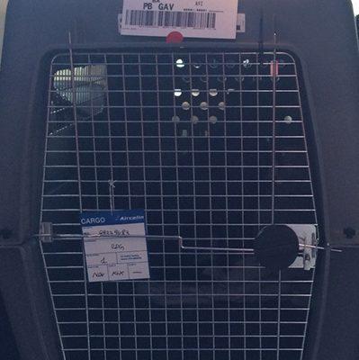 Transport animalier Nouvelle Calédonie - Transport animaux international