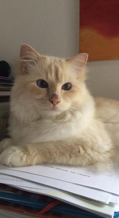 Garde de chat particulier 91 – Garde de chat à domicile Essonne