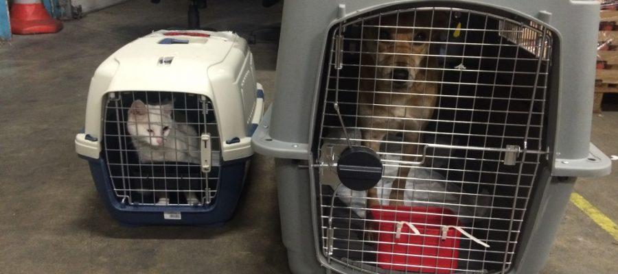 Cador et Mistigri - Transport d'animaux vivants type 2 en France