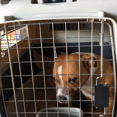 Taxi Chien Paris – Transport chien Ile de France – Taxi canin France
