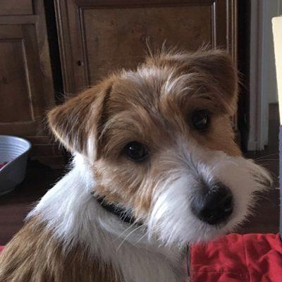 Garde de chien particulier 91 – Garde de chien à domicile Essonne