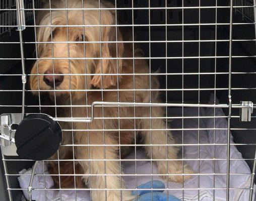 Transport animalier Essonne - Garde animaux 91 – Transport chien 91